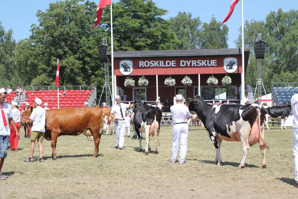Billeder fra Roskilde Dyrskue 2018
