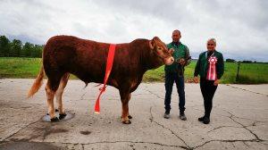 Skuets bedste kødkvæg: Kat. 25, Limousine-tyr, 2 års efter Lancelot, Jesper Boll Kragelund, Suldrup, 24 point