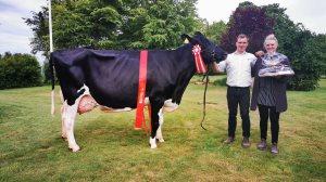 Skuets bedste malkeko: Kat. 35, Dansk Holstein, 4. kalvs Sargeant-datter, Christian Bøgh, Hobro, 23 point