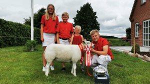Skuets bedste får: Kat. 22, Texel-får, 1 års uden lam, Familien Brøgger, Hadsten, 23 point