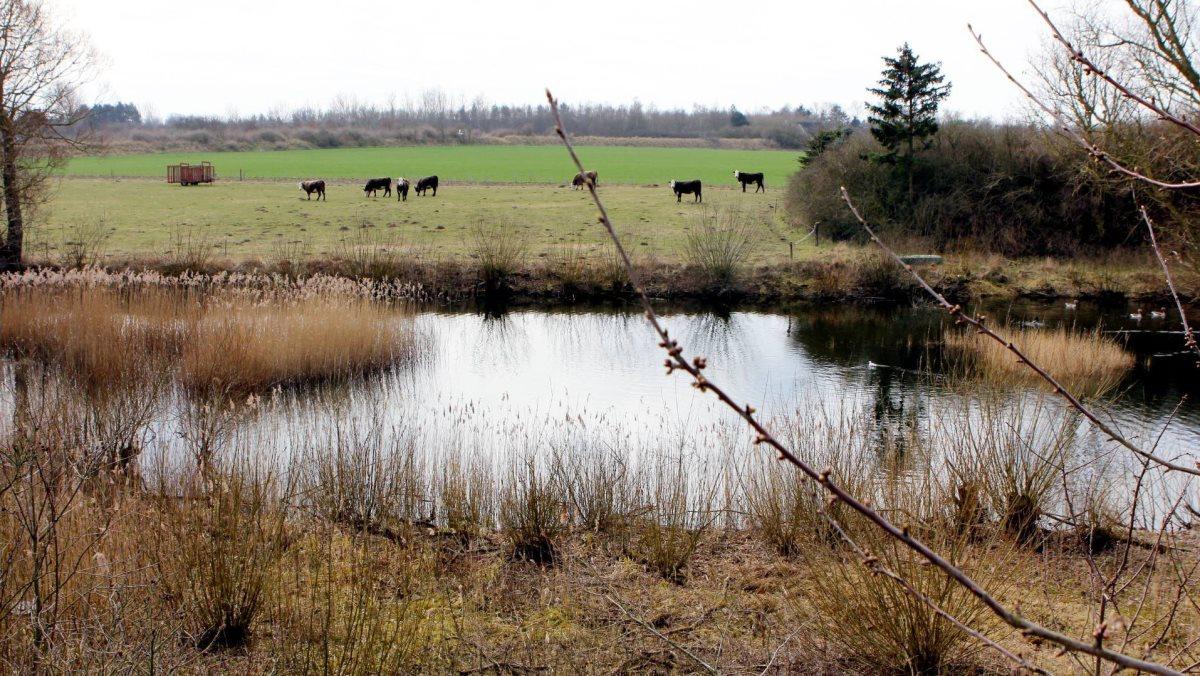 Herefter må landmænd ikke længere gøde, sprøjte eller dyrke i en 10 meter zone omkring alle åbne vandløb og søer over 100m2.