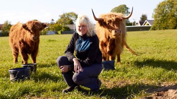 Cecilia Vanggaard har skiftet barndomsracen Charolais ud med Skotsk Højlandskvæg. I år udstiller hun kvien Olga, som er datter til Karen Helene, der var den første skotte på ejendommen i Syvsten ved Sæby.