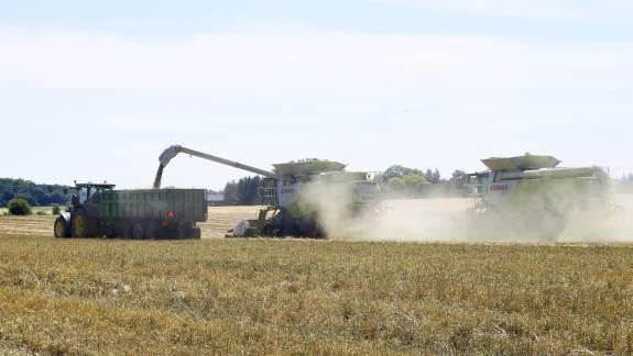 DLFs frøavlere tjener 85 millioner kroner ekstra for høst 2018