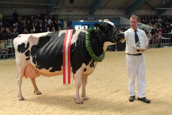 Den prestigefyldte kåring som Miss Danmark på Landsskuet i Herning gik til Dansk Holstein - en smuk ko fra Raunhøj Dairy I/S i østjyske Hjortshøj
