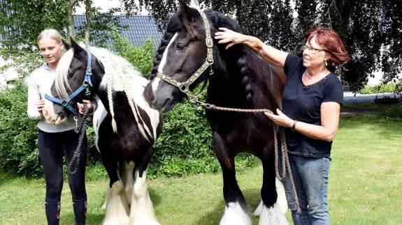 Det 120. hesteskue på Brahetrolleborg lørdag den 20. juli byder på både traditioner og nyheder.