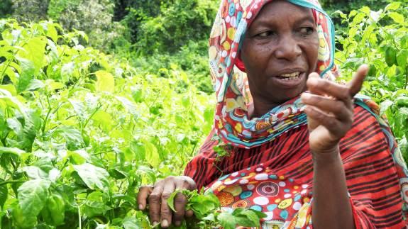 Økologisk Landsforening står i spidsen for en række ulandsprojekter, hvor primært Uganda og Tanzania bliver klogere på økologiske jordbundsmetoder, afsætning og politisk interessevaretagelse.