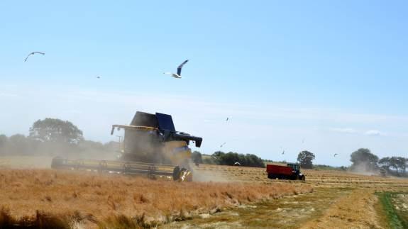 Solen varmer, maskinerne skinner og den 72-årige mejetærskerpilot har flere års erfaring end de fleste kan prale af. Solbjerg Maskinstation startede høstsæsonen op i frøet for et par uger siden og har generelt godt gang i såvel markarbejde som entreprenøropgaver.