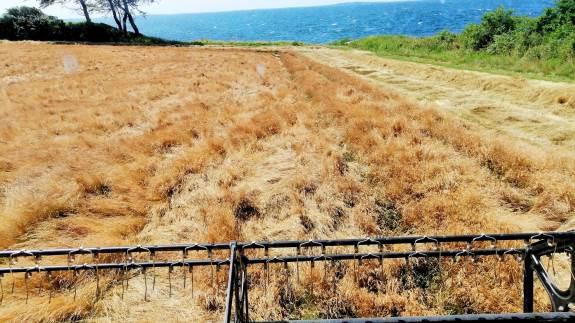 Frøhøsten har nu i nogle uger været i gang ved især de kystnære områder på Fyn og øerne, og foreløbig har avlskonsulent Vera Jacobsen, DLF, kunnet spore tilfredshed hos høstfolket.