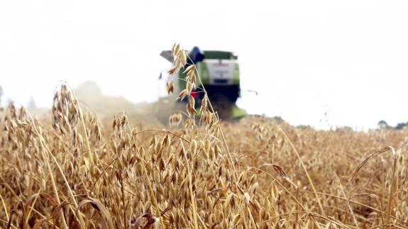 Din afgrødes økologiske status kan ændres, hvis høsttidspunktet ændrer sig.