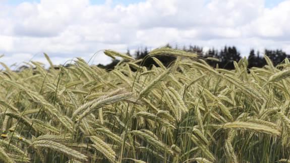 Ny funktion i Cropsat viser en proteinprognose i dine vinterhvedemarker inddelt i flere grupper.