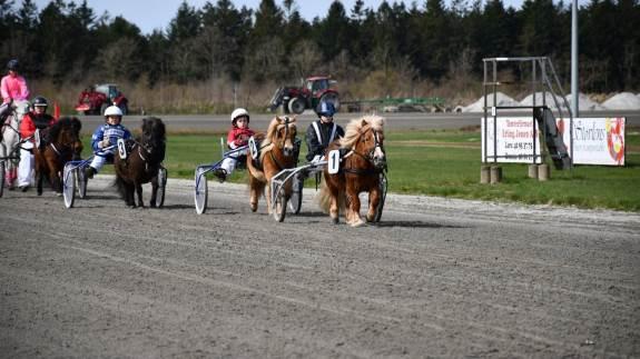 Skive Trav og Rideklub byder på flere spændende pony og hesteaktiviteter til Hesten i fokus.