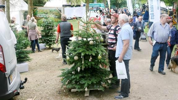 Når Langesømessen åbner for 28. gang, er det med en række nye initiativer samt et nyt skovspor. Den tiltagende interesse for juletræer og pyntegrønt har nemlig givet anledning til at inkludere skovbruget mere.