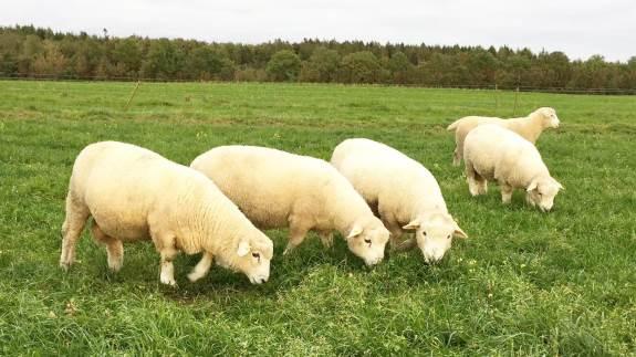 Med mere viden om smittespredning kan mange fåreavlere med enkle tiltag nedsætte smittepresset og få mere ud af sine slagtelam.