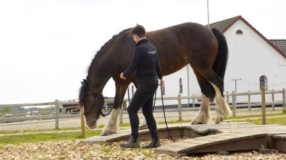 Djurs Horse Park har netop indviet Danmarks første internationale godkendte Mountain Trail-bane. En hestesport, som handler om samarbejdet mellem hest og rytter og kan udføres både som hyggesport og på konkurrenceplan. Bag projektet står Helle Knudsen, som siden 2016 har drevet rideskolen, Den Hele Ekvipage, i Nørager på Djursland.