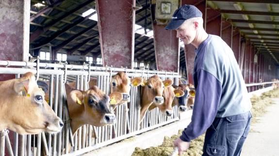 Banken sagde nej, og så måtte den unge Thomas Bæk Jensen gøre det selv. Købe et slidt husmandssted, etablere malkerum og købe 40 køer. I dag sidder han for bordenden på Kjærholm – en mælkeproduktionsejendom med plads til knap 300 malkekøer i Vendsyssel.