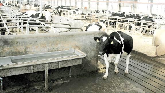 Virksomheden GoBright har specialiseret sig inden for ECA-Vand til blandt andet desinfektion af kvægstalde. Blandt kunderne er virksomheden Vestergaard Nustrup, Vojens, hvor man har gode erfaringer med vandet, der er fremstilles ved hjælp af elektrolyse og oprindeligt er udviklet i Rusland.