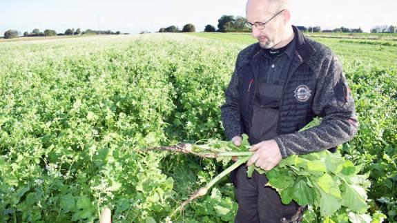 Både for økologer og konventionelle landmænd er det vigtigt med veletablerede efterafgrøder.
