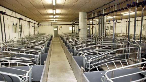 Stigende priser på slagtesvin og fyldte kornlagre har givet landmændene interesse for at få optimeret produktionsapparatet. Det kan gøres nemt, og uden de store omkostninger, hvis landmændene får lavet en Miljøgodkendelse efter de nye regler, lyder det fra Rikke Skyum, chef for Land, miljø & erhverv, Djursland Landboforening.
