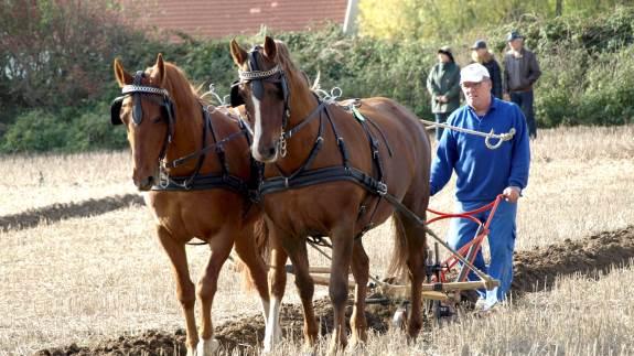 Himmerlands Køre- og Rideforening er vært for DM i pløjning med heste lørdag den 19. oktober på Nordjyllands Landbrugsskole.