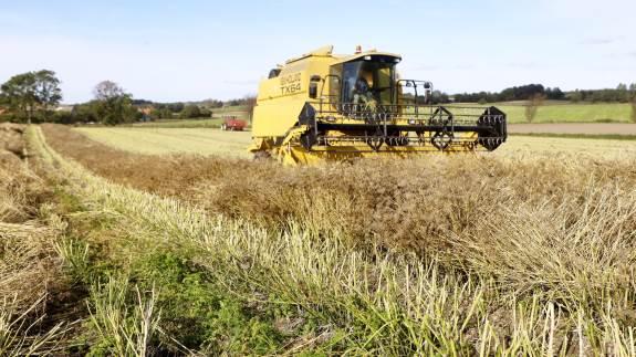 I sidste uge høstede Michael Pedersen på Hindsholm persillefrø, som har været halvandet år undervejs på 2,5 hektar. Og den erfarne specialafgrødeavler kunne glæde sig over et godt udbytte på omkring to tons pr. hektar og dermed 40.000 kroner pr. hektar.