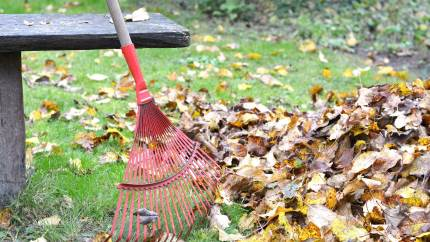 Haveejere bør lade nedfaldne blade og kviste ligge, så solsort og insekter kan få gavn af det.