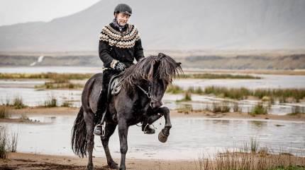 Det er fascinerende at sidde højt til hest og se op mod 9.000 får foran sig og på vej ned fra bjergene. Sådan lyder det fra Mogens Kofoed Marker i det tredje og sidste rejsebrev fra Island.