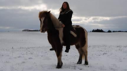 Måske er den perfekte julegave til læsehesten og hesteelskeren en netop udkommet bog om Islandske hestenavne. Bogen bærer titlen »Navnebogen Islandske heste Fra Álfadís til Steinálfur« og er skrevet af nordjyske Lise Hvarregaard.