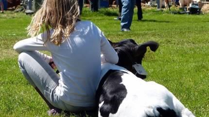 Siden 2006 har der hver sommer været MidtWest Farmshow i Skive, men det lokale skue er truet på sin eksistens fordi der blandt andet mangler frivillige for at skuet fortsat kan overleve.