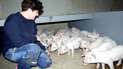 Luise Ipsen er agrarøkonom med speciale i kvæg, men i dag passer hun grise med fine resultater.