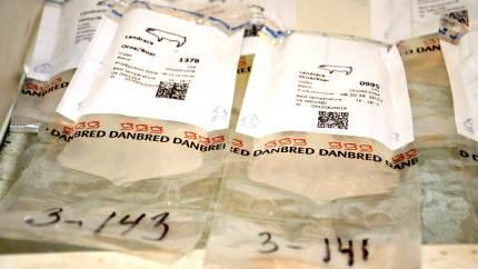 For at kunne opgøre tab i forbindelse med smitte med den nye PRRS-variant fra sidste år søger Seges Svineproduktion produktionsdata fra ramte besætninger.