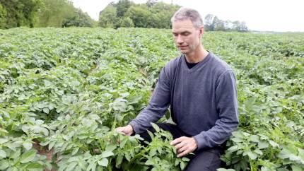 Flere interesserede avlere har mulighed for at tegne anpart i det fynske kartoffelmelsprojekt på lige fod med de første 47 anpartshavere.