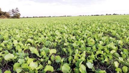 Hvis jordens mikroorganismer og regnorm er i god form, tilbageholder jorden mere CO2. Derfor slår Agri Nord et slag for, at landmændene sørger for, at jorden er frugtbar.
