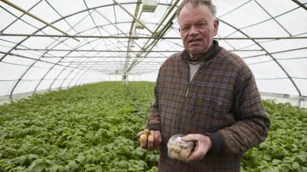 Karl Larsen fra Herrested på Østfyn er for femte år i træk først med nye danske kartofler.