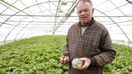625 kroner kiloet blev drivhuskartoflerne fra Karl Larsen i Kragelund ved Herrested solgt for i udvalgte sjællandske Coop-butikker.