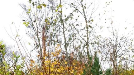 Der er stadig gode grund til at oprette nye læhegn, siger plantningskonsulent Sune Glistrup.