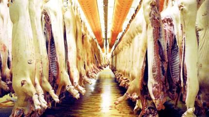 Tican-slagteriet i Brørup holder åbent for slagtninger i påskedagene på grund af coronavirus.
