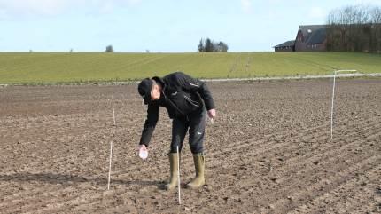 I samarbejde med Seges laver Agri Nord en række test ude hos nordjyske landmænd, for at se om der er fosformangel på markerne.  – Selvom vi i teorien giver nok fosfor, så kan vi alligevel have mangel, fortæller chef for Agri Nord Planteavl, Flemming Floor Jensen.