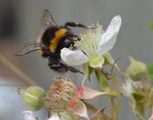 Store mængder af insekter forsvinder i Danmark, men man kan selv gøre en masse for at hjælpe dem.