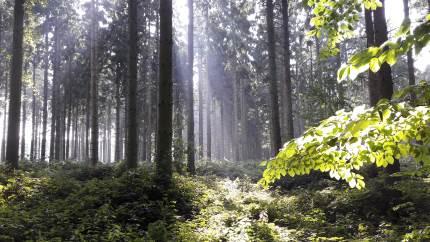 Forligspartierne bag »Budget 2019« i Aarhus Kommune har fået Teknik og Miljø-afdelingen til at undersøge mulighederne for at omlægge Marselisborgskovene til urørt skov, såkaldt vildskov. Mange har givet deres mening til kende og valget er faldet på scenarie 2b, som kommunen nu vil arbejde videre med.