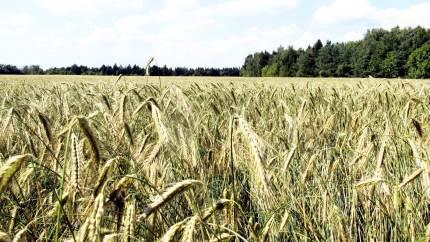Seges og Økologisk Landsforening går nu i gang med at udvikle fremtidens landbrugsredskab: Et digitalt værktøj, som landmanden kan bruge til at beregne sin gårds klimaaftryk.