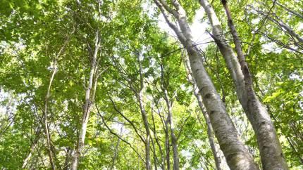 En gruppe foreninger er frustrerede over Aarhus Kommunes planer om at hegne en del af Marselisborg Skovene ind for at gøre plads til græssende dyr. De frygter, det vil reducere brugernes adgang.