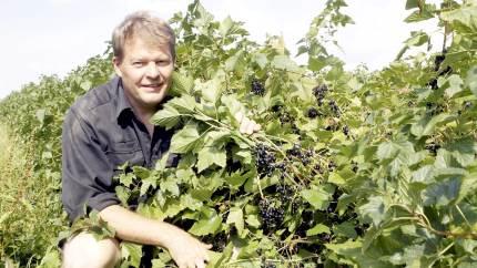 Bæravlen er i fokus, når LandboUngdom og Økologisk Landsforening inviterer til inspirationsaften onsdag den 17. juni i Kogsbølle.