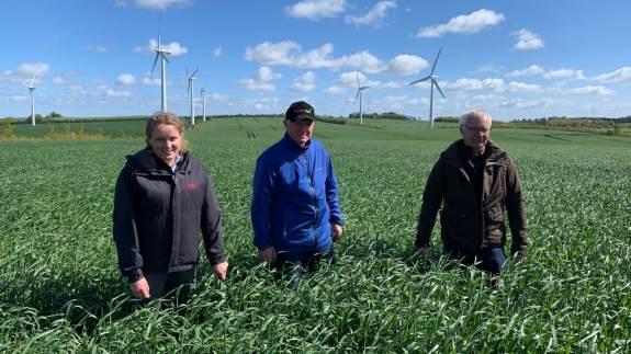 Niels Henrik Dalsgaard Andersen, Aalborg, er glad for at have hybridrug i sædskiftet på grund af dens mange gode egenskaber, og fordi det er en stabil afgrøde.