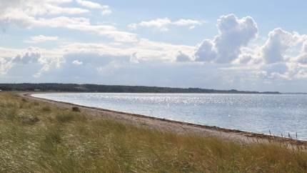 Nu vil landboforeningerne LandboNord, Agri Nord, LandboThy og Landboforeningen Limfjord have klarlagt, hvor mange næringsstoffer, blandt andet kvælstof og fosfor, der er i udledningerne fra kommunerne. Det vil de, efter det er kommet frem, at flere kommuner udleder urenset spildevand direkte i Limfjorden.