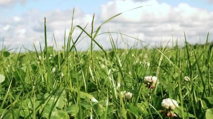 Udbyttegevinsten i første slæt 2021 ved etablering primo august er omkring 1.000 FEN pr. hektar sammenlignet med såning omkring 1. september, oplyser DLF Seeds