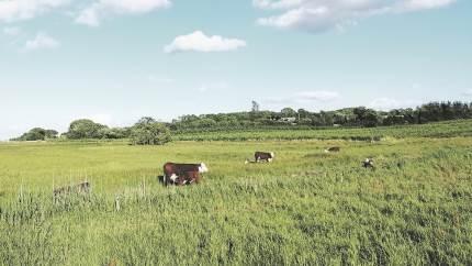 Der kan nu søges tilskud til sammenhængende arealer med tilknytning til Natura2000-områder, og som noget nyt, er det fra i år også muligt at søge tilskuddet på Fyn. Det meddeler Velas.