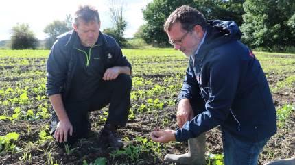 """Grubbesåningen ser indtil videre ud til at være en stor succes hos den midtjyske planteavler Torben Kuhr. """"Det sparer tid, det løsner jorden, og så forventer jeg, at udbyttet stiger"""", lyder det."""