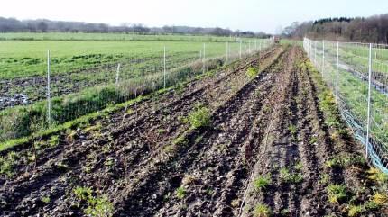 Lokalt laug i Esbjerg udbetaler en del af formuen, så landmænd kvit og frit kan få deres læhegn udtyndet. Men bag det glade budskab lurer bekymring for fremtiden.