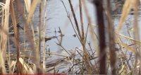 Næstformanden i Danske Vandløb, Ib W. Jensen, peger på, at der er stor forskel på, hvordan kommuner vedligeholder vandløb. Han opfordrer lodsejere nær vandløb om at finde sammen i lokale foreninger for at råbe kommunerne op, hvis der er store problemer.