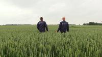 Her i juni 2019 har der ikke været flottere hvedemarker lige så længe som faglig reporter Jørgen P. Jensen kan huske.